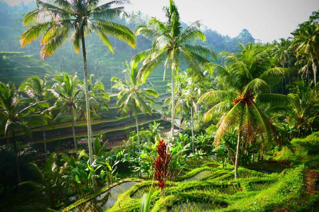 Arrozales de Tegalalang, Bali, Indonesia.