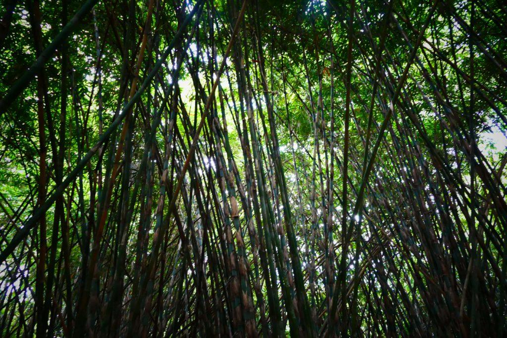Bosque de Bambu, Penglipurán.